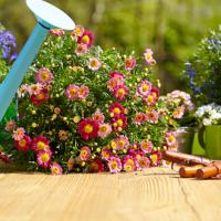 I lavori per il giardino nel mese di Maggio