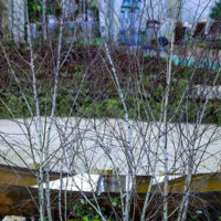 Il Giardino dei Semplici esalta l'arte nella natura