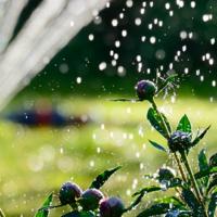Scegliere i sistemi d'irrigazione
