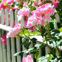 Giardini di giugno: i principali lavori da fare