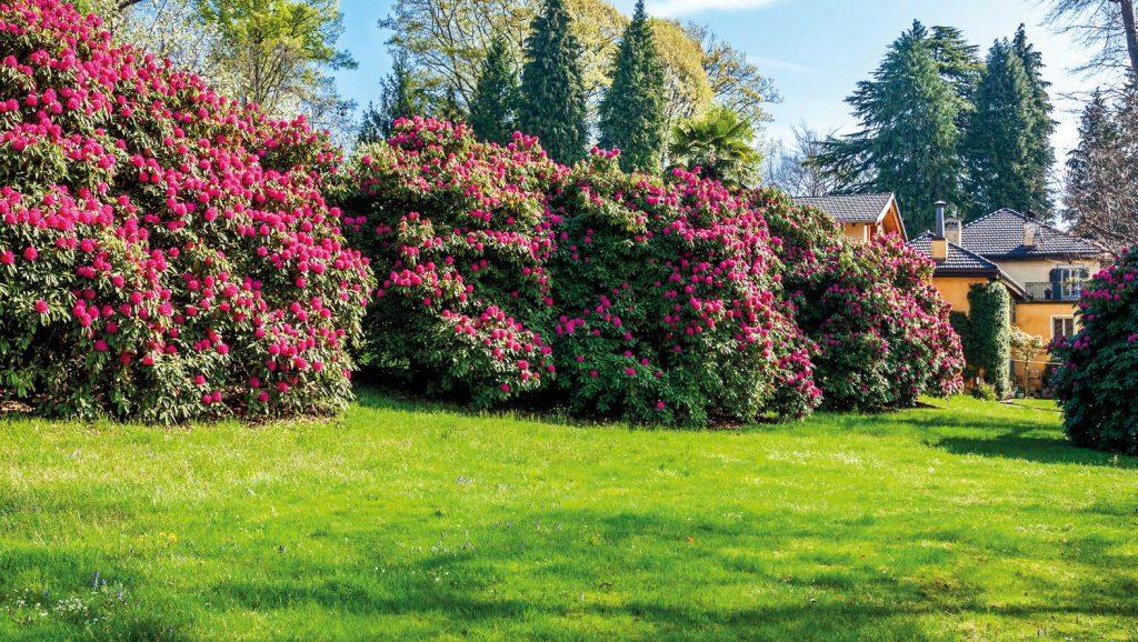 giardino antico degli anni 20 riqualificato con piante nuove