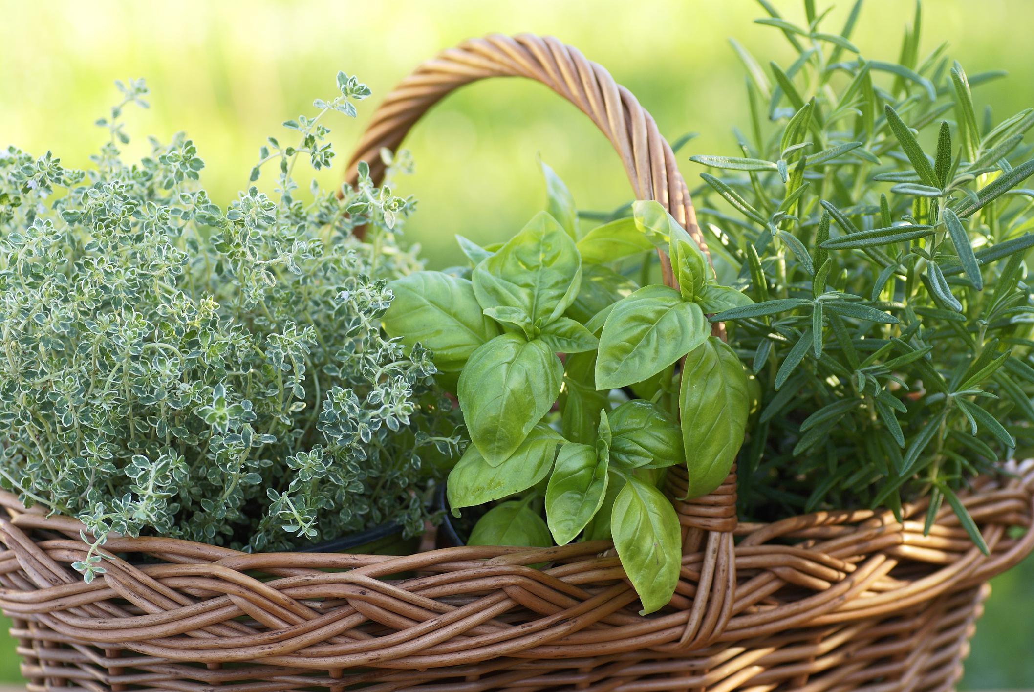 Coltivare In Casa Piante Aromatiche spezie da coltivare: 5 idee per il tuo terrazzo - ville&casali