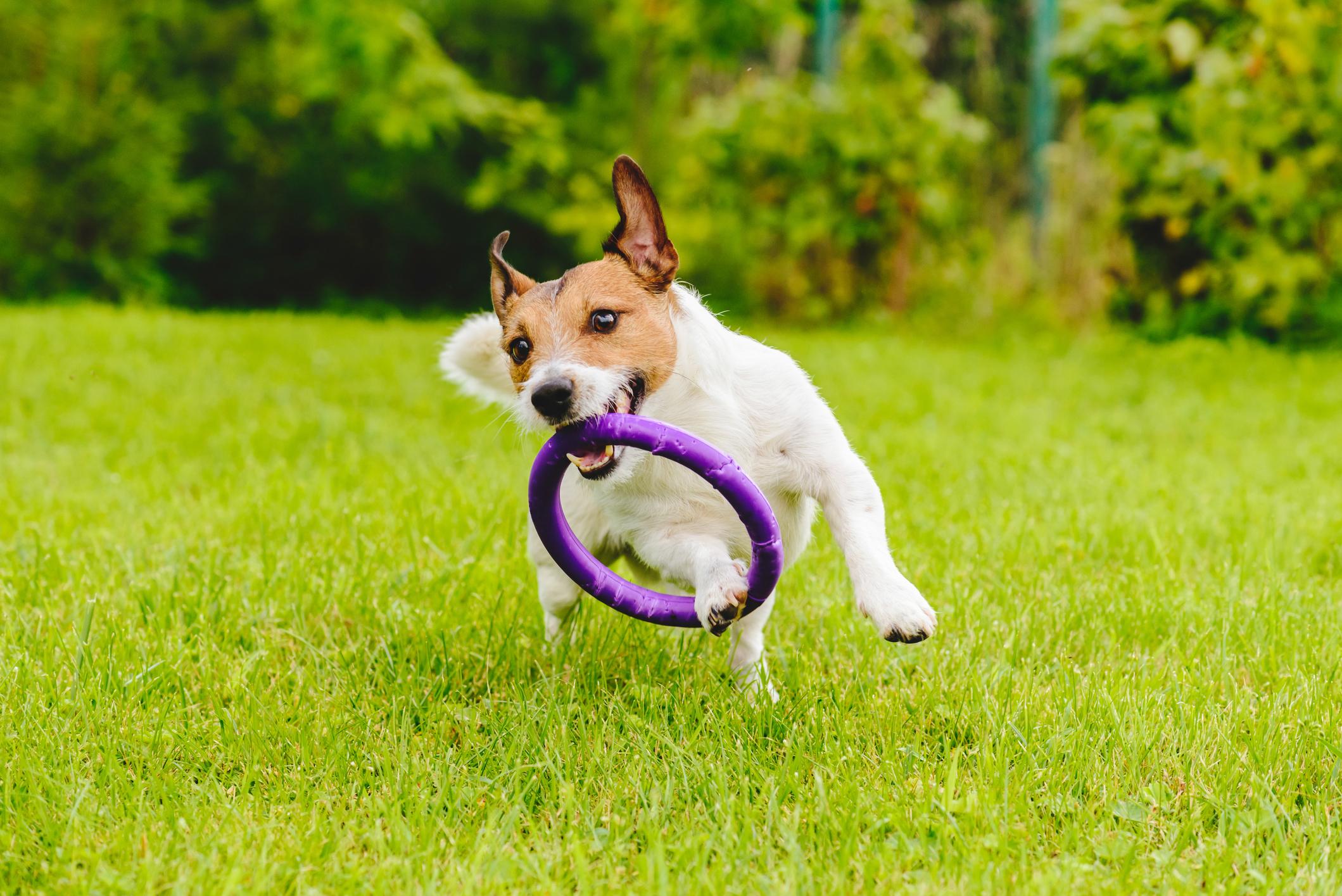 Giochi Da Fare In Giardino idee per il giardino: un parco giochi a misura di cane