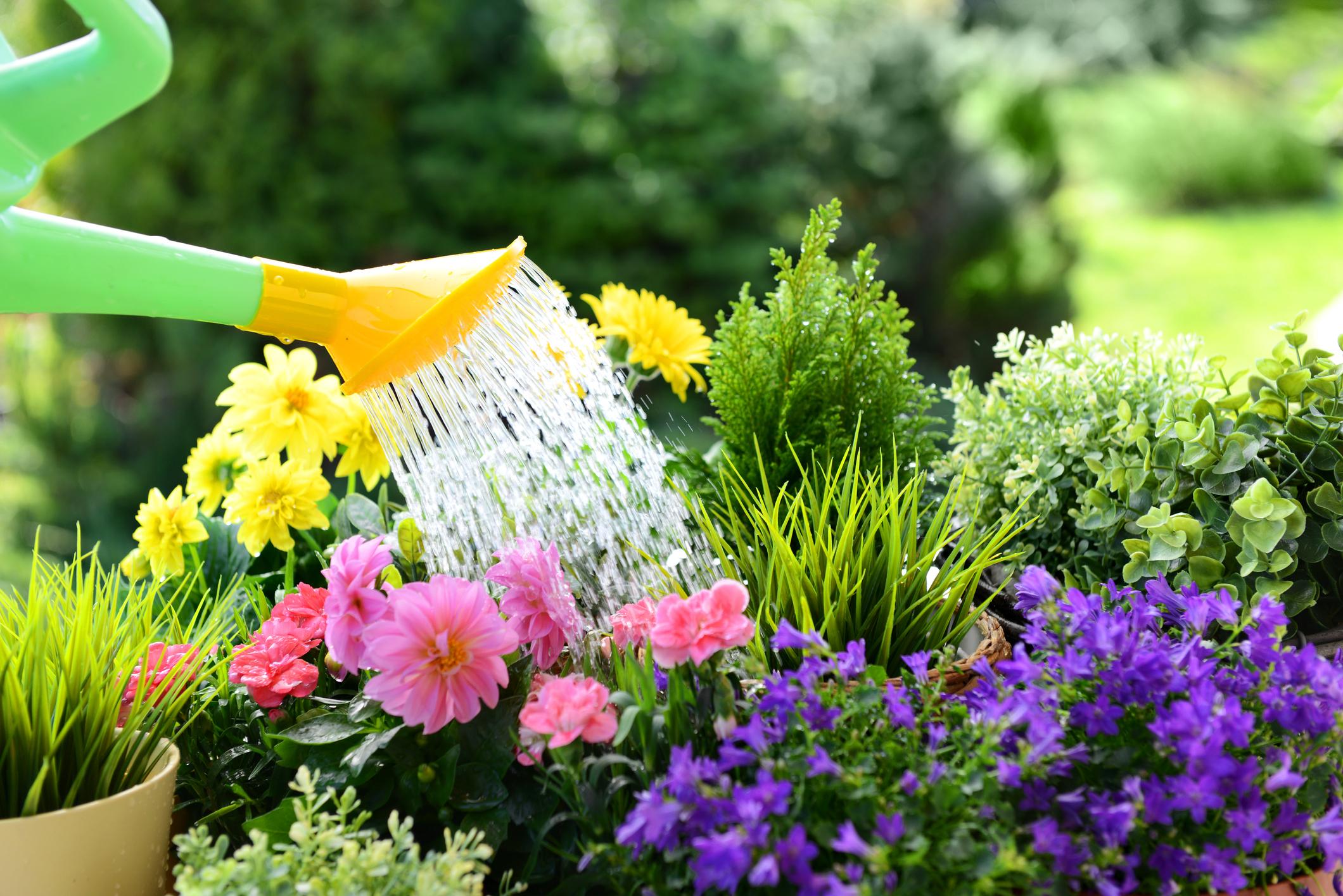 Fiori Da Giardino In Montagna cinque fiori profumati da piantare in aprile - ville&casali